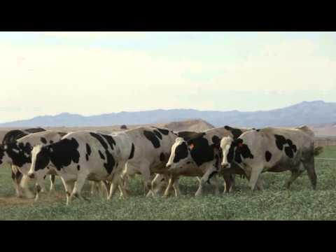 About Rockview Farms