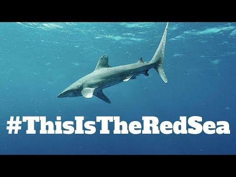 Red Sea Shark Diving, Marsa Alam, Golden Triangle