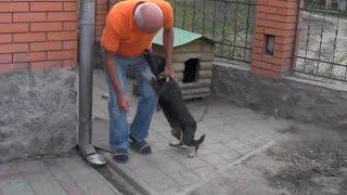 Домашние кошки и собаки. Собачья любовь