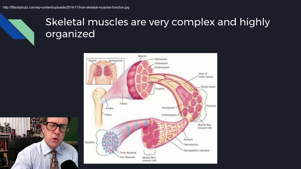 Download Physiology Lecture 08 Excitable Tissues