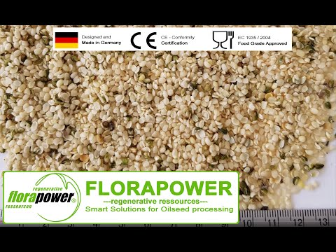 Hemp seed pressing – oil extraction of peeled hemp seeds with automatic screw press by Florapower