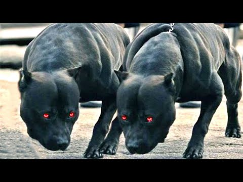 10-guard-dogs-you-don't-want-to-mess-with