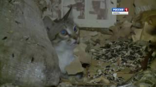 Квартира-свалка: Как в Перми расселяли «кошкин дом»(, 2016-06-09T08:48:01.000Z)