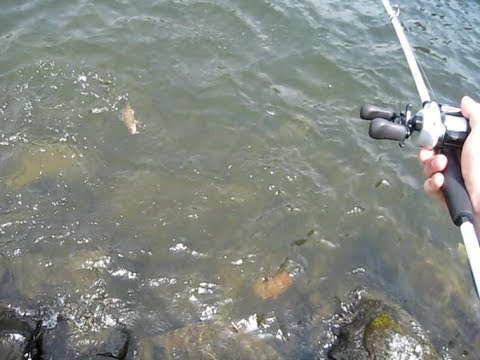 how to catch bass from shore