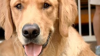 One Vision  A Guide Dog Documentary