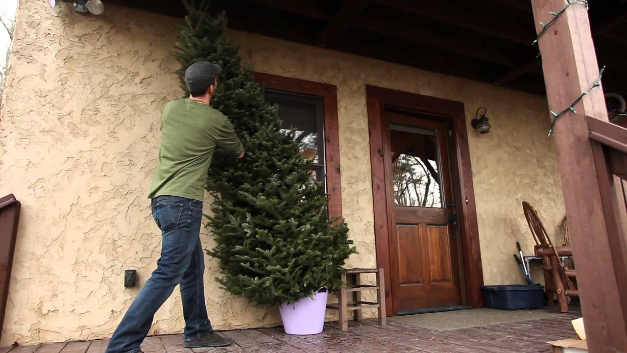 The Perfect Christmas Tree - Fresh