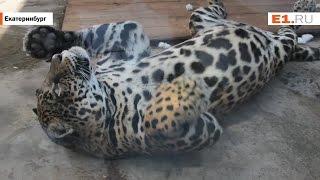 Питомцы Екатеринбургского зоопарка принимают душ и солнечные ванны