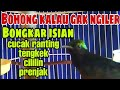 Konin Gacor Full Isian Mewah Power Mantaaap  Mp3 - Mp4 Download