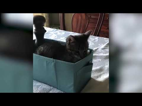 FUNNY and CUTE Cat Videos! - Adorable Cat Compilation