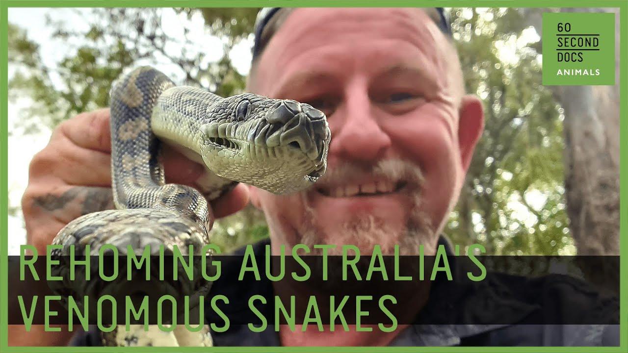 Rehoming Australia's Venomous Snakes