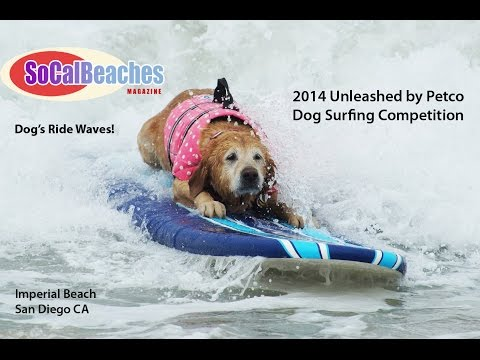 2014 Unleashed by Petco Dog Surfing Competition Highlights
