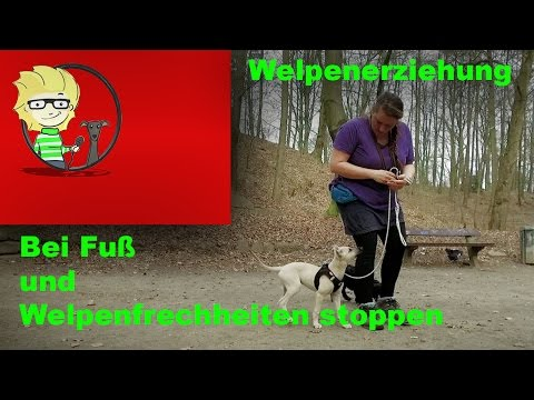 (FOLGE 10) Welpenerziehung: Fuß beibringen und Welpenfrechheiten richtig stoppen