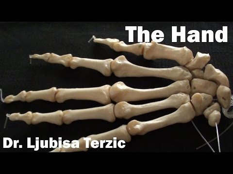 Human Anatomy Video: Skeleton of the Hand