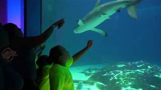 EducationWorks visits Camden Adventure Aquarium