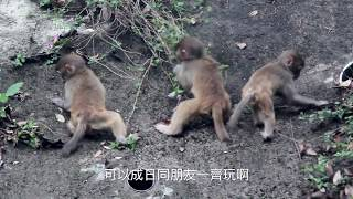Publication Date: 2020-02-05 | Video Title: 尋找自然的故事 2019|馬騮。港故事|短片組季軍
