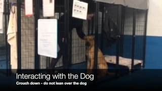 Entering The Kennels And Greeting Dogs 3