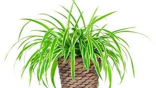 видео Комнатные растения