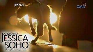Kapuso Mo, Jessica Soho: Mga pusa sa Rizal, misteryosong nawawala
