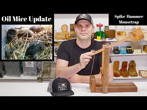 Oil Mouse Update, Hat Contest Winner, & Preview Of the Hammer Spike Mousetrap.