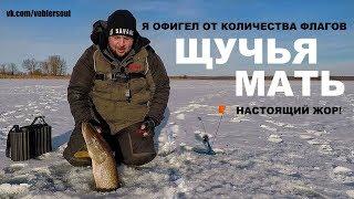 ЩУЧЬЯ МАТЬ! Жерлицы на Щуку. ТРОФЕЙ ВЗЯТ! Зимняя Рыбалка в Декабре.