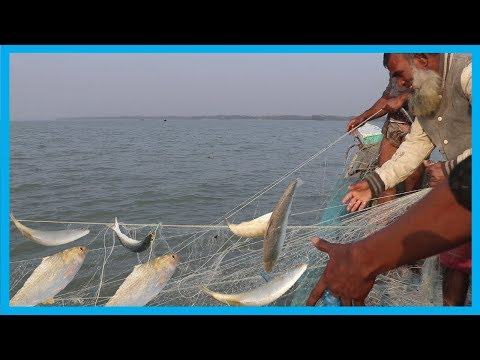 Amazing Fast Hilsa Fishing Skill | Catching Hilsa Fish Big On The Sea | Fish Corn