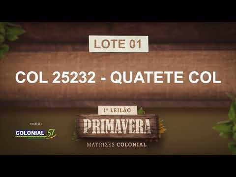 LOTE 01   COL 25232