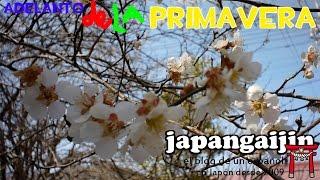 Japon en primavera fotos