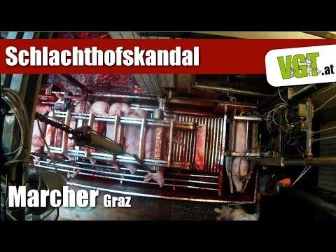 Schlachthof Marcher Norbert Gmbh Graz