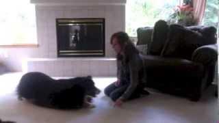"Train Your Dog To ""crawl"""