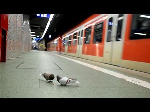 PigeonsFlocktoFrankfurtCentralStation