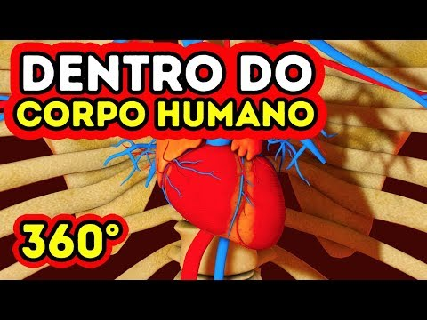 O que acontece dentro do seu corpo? || 360 VR