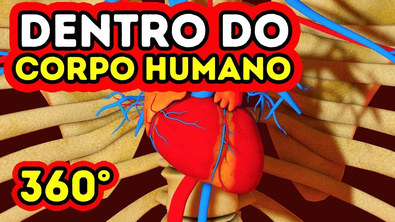 O Que Acontece Dentro Do Seu Corpo 360 Vr Youtube