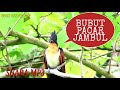 Full Gacor Bubut Pacar Jambul  Mp3 - Mp4 Download