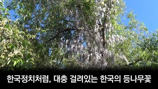긴세월 다듬지 않은 정치처럼, 대충 걸려있는 한국의 등…
