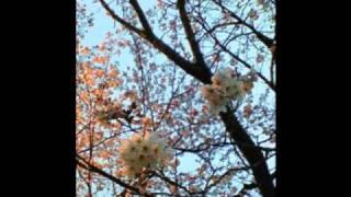 作詞・作曲 石渡陽介 一途な想い伝えられぬまま 出会って2度目の春が訪...