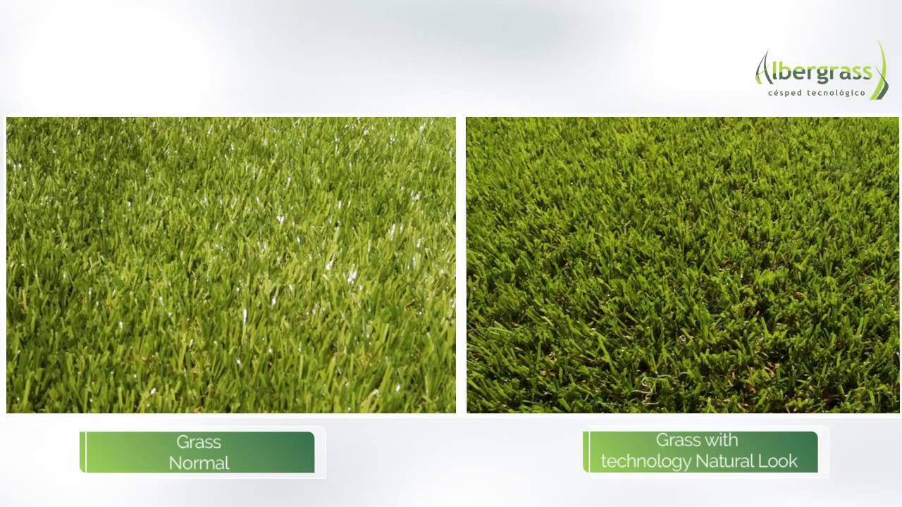 Artificial Turf Albergr With The