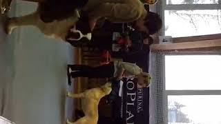 Выставка собак город Тверь