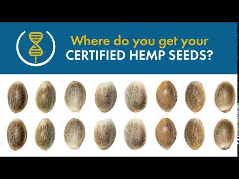 Where do you get your Certified Hemp Seed?