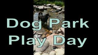 Service Dog at a Dog Park