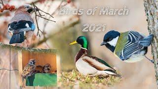 Birds of March 2021. Birds of Ukraine / Птицы марта 2021