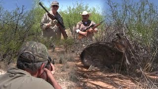 Rabbit Hunting with Spring Piston Airguns