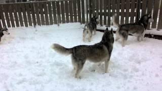 2014/12/18 この冬初の積雪で雪遊び.