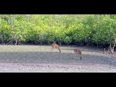 Bangladesh Khulna Sundarbans Explorer Package Holidays Trave