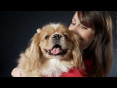 Pets Make Our Lives a Million Times Better - Presented By Petco