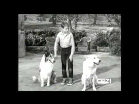 "Lassie - Episode #348 - ""Guide Dog"" - Season 10, Ep. 25 - 04/05/1964"