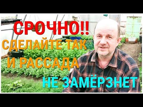 Защита помидоров от Заморозков. Чтобы рассада Томатов не замёрзла. Ночью Заморозки, что делать ?