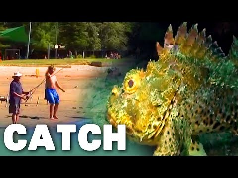 Fishing In Sydney Harbour | What Lies Beneath (Harbour Marine Life Documentary) | Catch