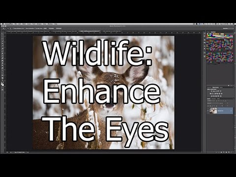 Enhance the Eyes in Wildlife Photos to Add Some Pop