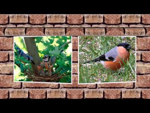 Птицы летом фото