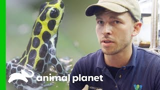 Raising Poison Dart Frogs | The Zoo: From The Inside